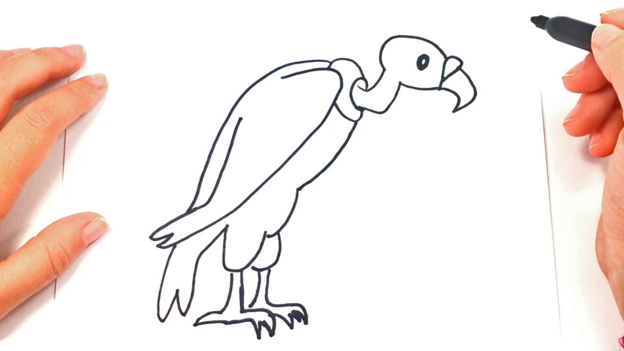 1280x720 How To Draw A Vulture For Kids Vulture Drawing Lesson