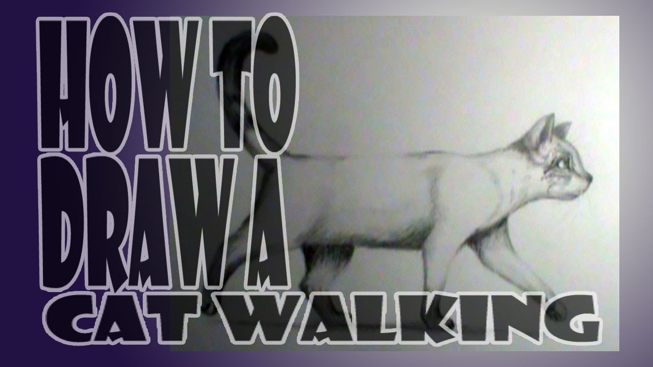 1280x720 How To Draw A Cat Walking
