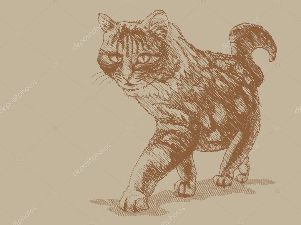 1023x767 Walking Cat Stock Photo I3alda