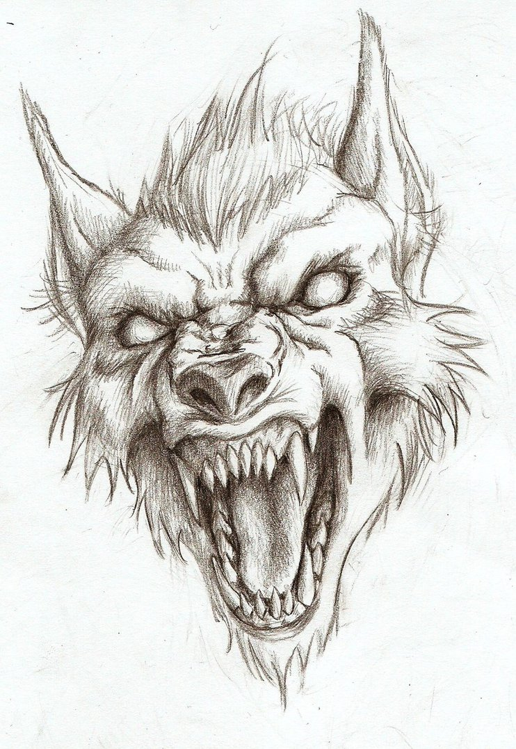 742x1077 Werewolf Head Drawing (Not My Art!) The Werewolves