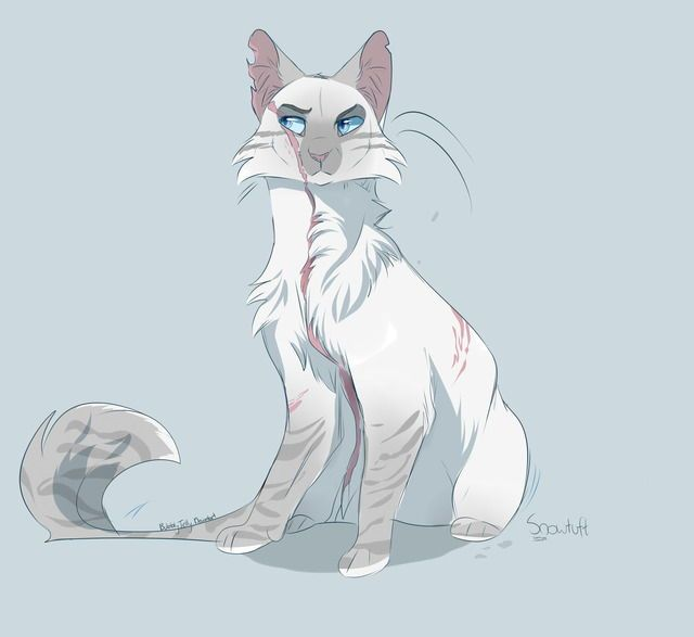 640x587 Pin By Addison On Lololp Warrior Cats, Cat And Creatures