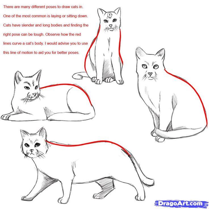 736x736 Warrior Cat Drawings Cat Lovers
