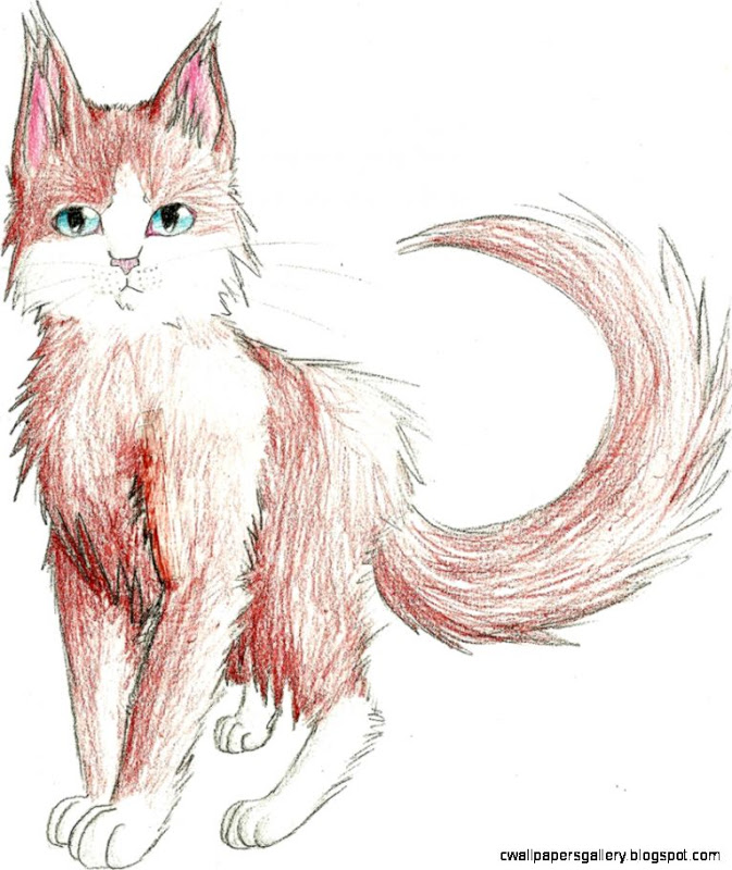 673x800 Warrior Cat Drawings In Pencil Wallpapers Gallery