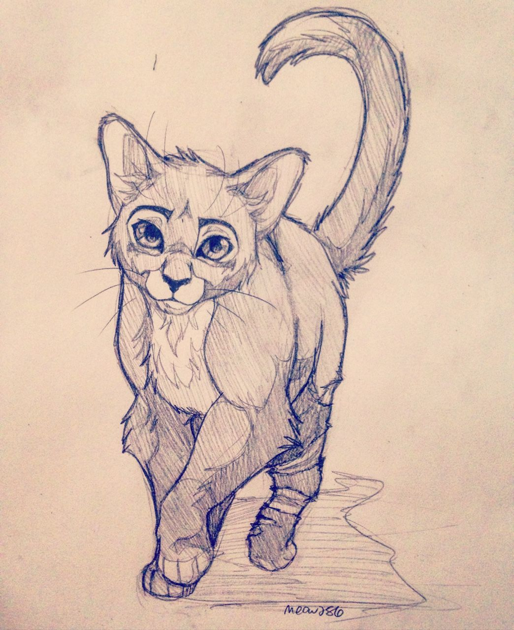 1044x1280 Art Warrior Cats, Cat And Drawings