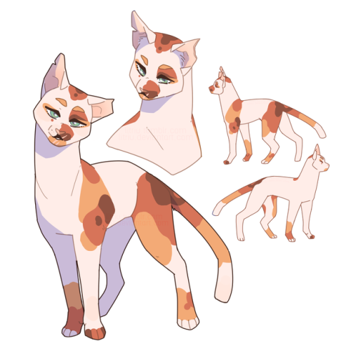 500x512 Litriu Up Here's A Cat His Name Is Poppyleg Warriors