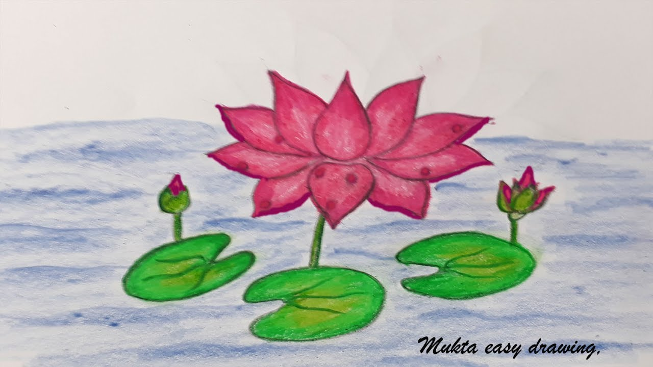 Water lilies drawing at getdrawings free for personal use 1280x720 how to draw waterlilyep by step very easy izmirmasajfo Gallery