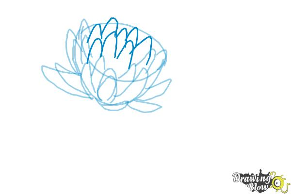 600x400 How To Draw A Lotus Flower, Water Lily