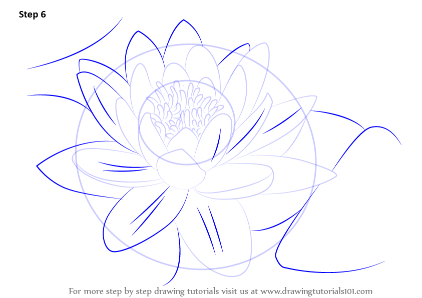 843x596 Learn How To Draw A Water Lily (Lily) Step By Step Drawing Tutorials