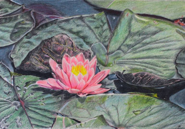 770x538 Saatchi Art Water Lilly Drawing By Laura Hall