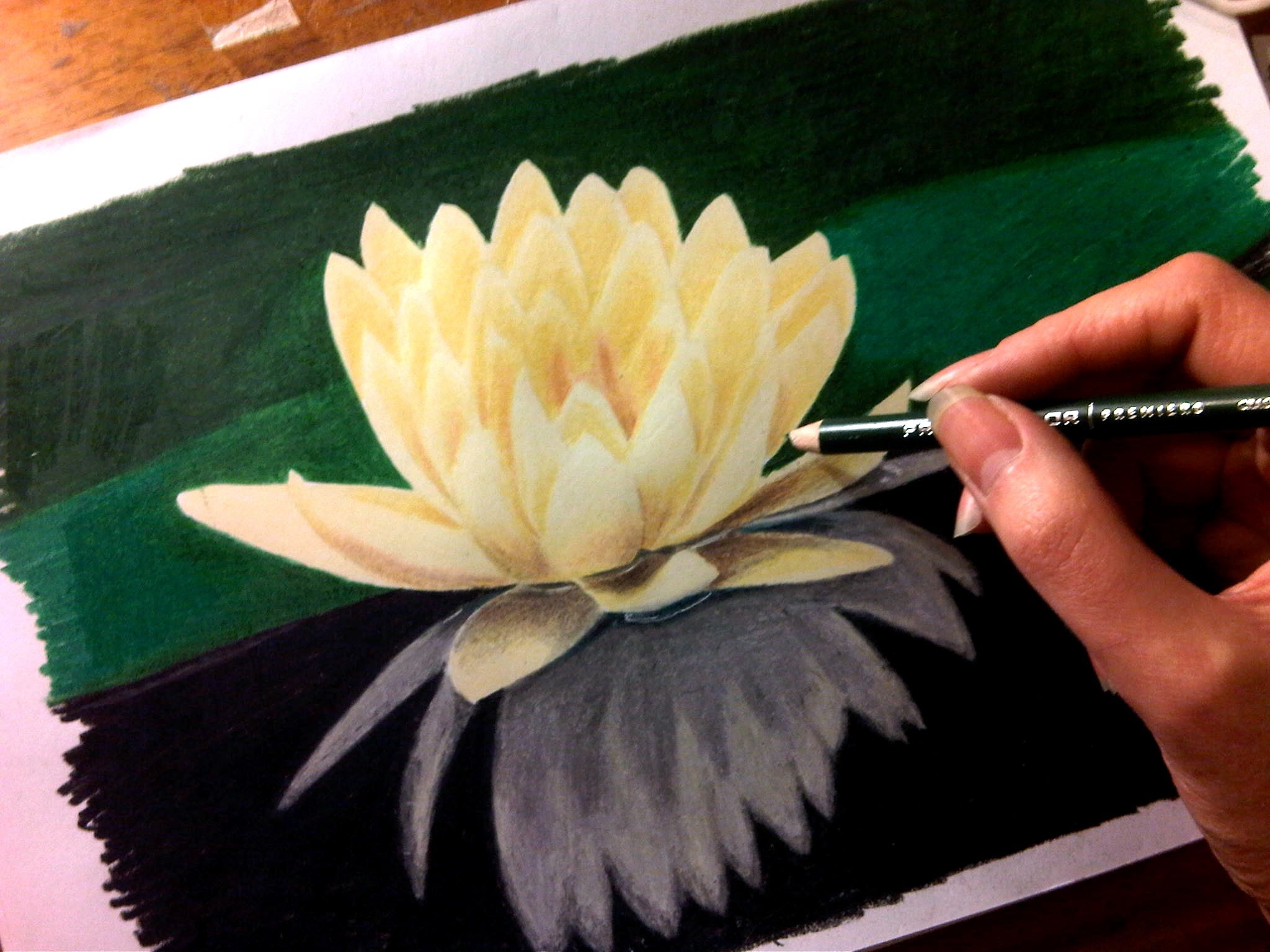 2048x1536 Time Lapse Drawing Of Flower Water Lily
