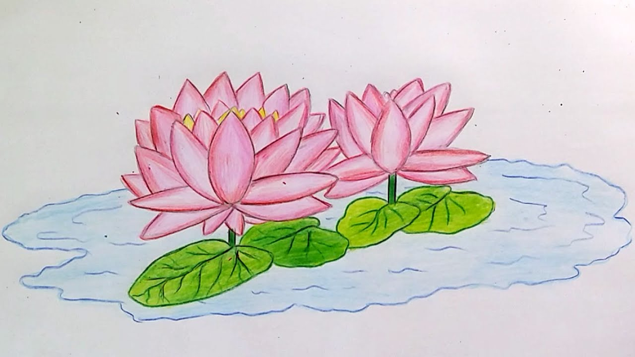 1280x720 Water Lily Drawing Step By Step Learn How To Draw Water Lily Step