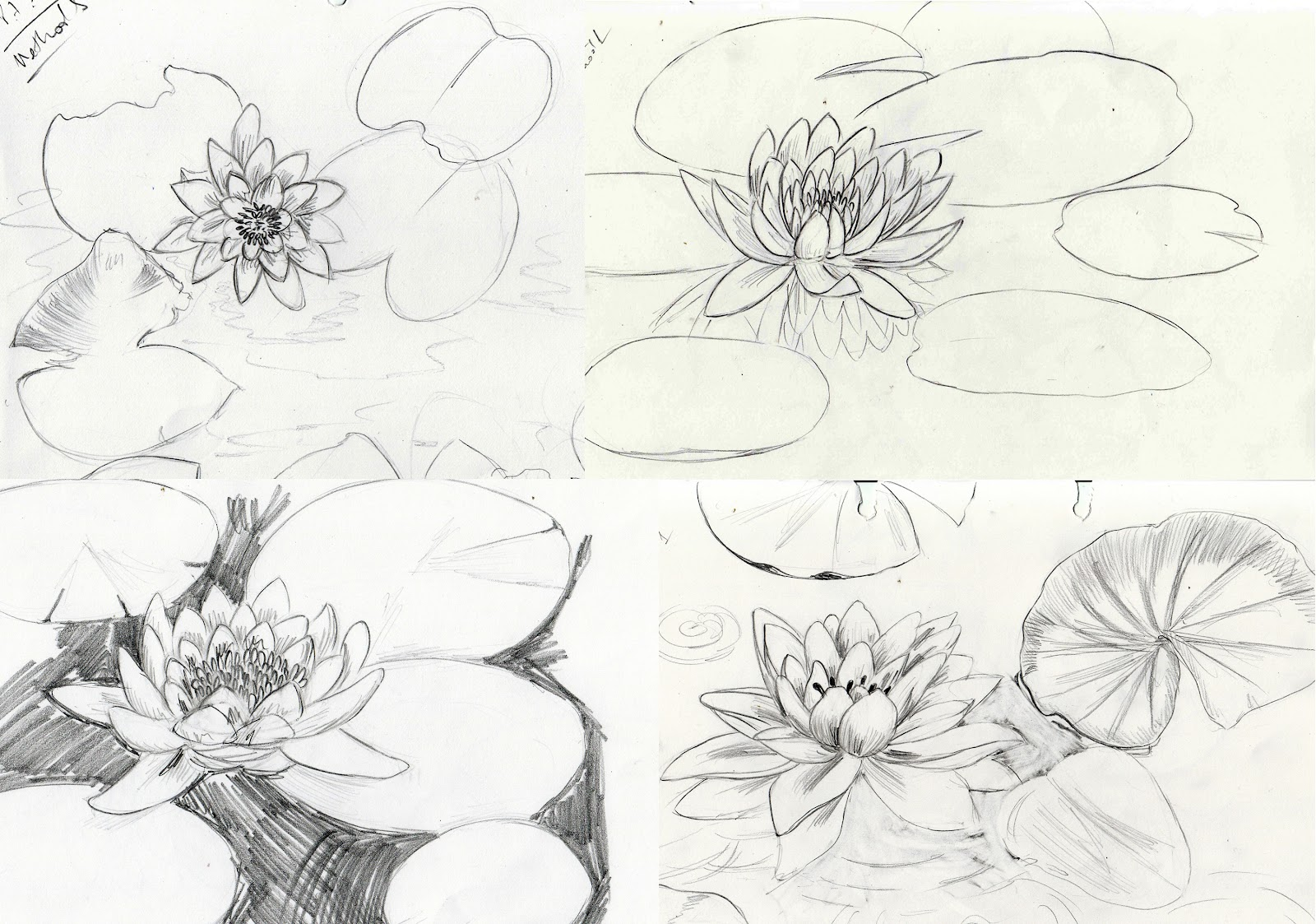 Water lily drawing at getdrawings free for personal use water 1600x1123 weekly doodles and tuts how to draw a water lily izmirmasajfo
