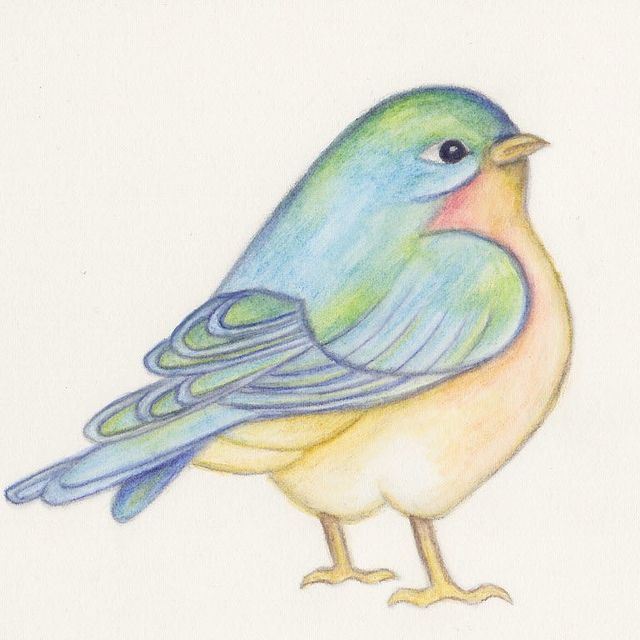 640x640 bluebird finished watercolor pencils watercolor and bird