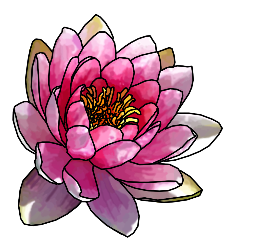 1134x991 Pink Water Lily Tattoos Water Lilies And Water