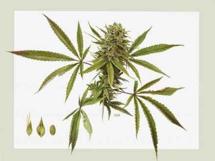 440x330 Tattoo Weed Pot Leaves Drawings, Pot Plant Drawing