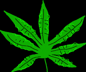 300x250 Weed Plant