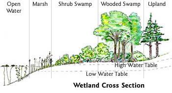 350x190 Rhode Island Wetlands Rhode Island Department Of Environmental