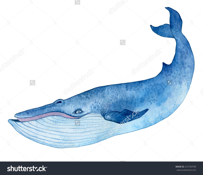 1500x1297 Blue Whale