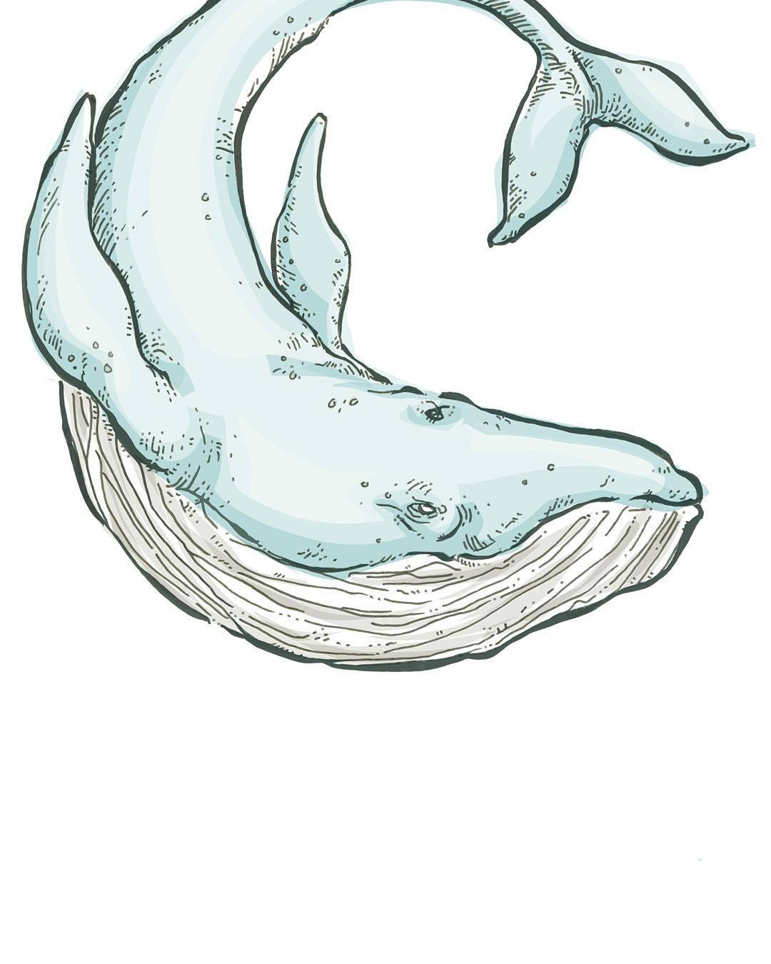 1080x1350 Blue Whale For The Fantastic @themochiandthebear
