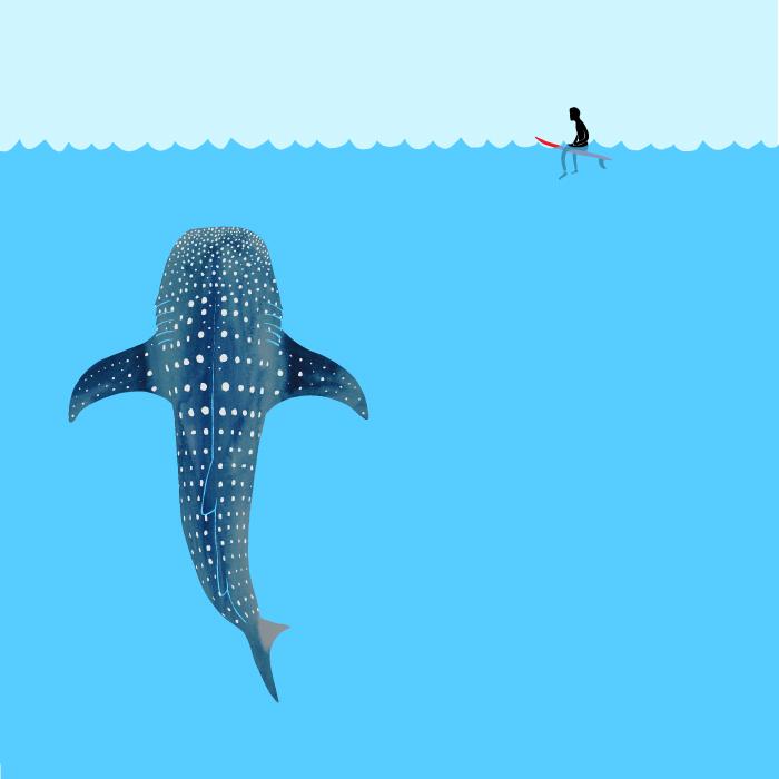 700x700 Whale Shark Drawing Jonas Claesson