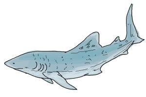 300x200 How To Draw A Whale Shark