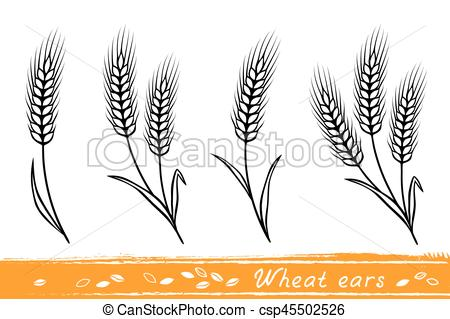 450x319 Set Of Wheat Ears. Set Of Isolate Wheat Ears With Grain Vector