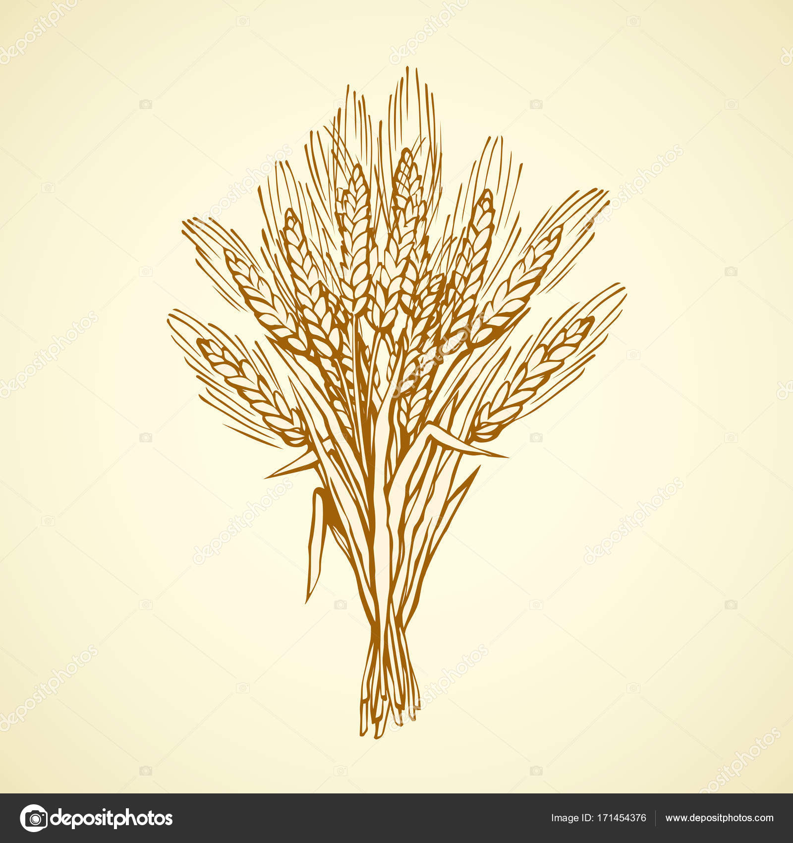 1600x1700 Seven Spikelets Of Wheat. Vector Drawing Stock Vector Marinka