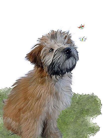 413x550 222 Best Wheaten Love Images On Terrier, Terriers