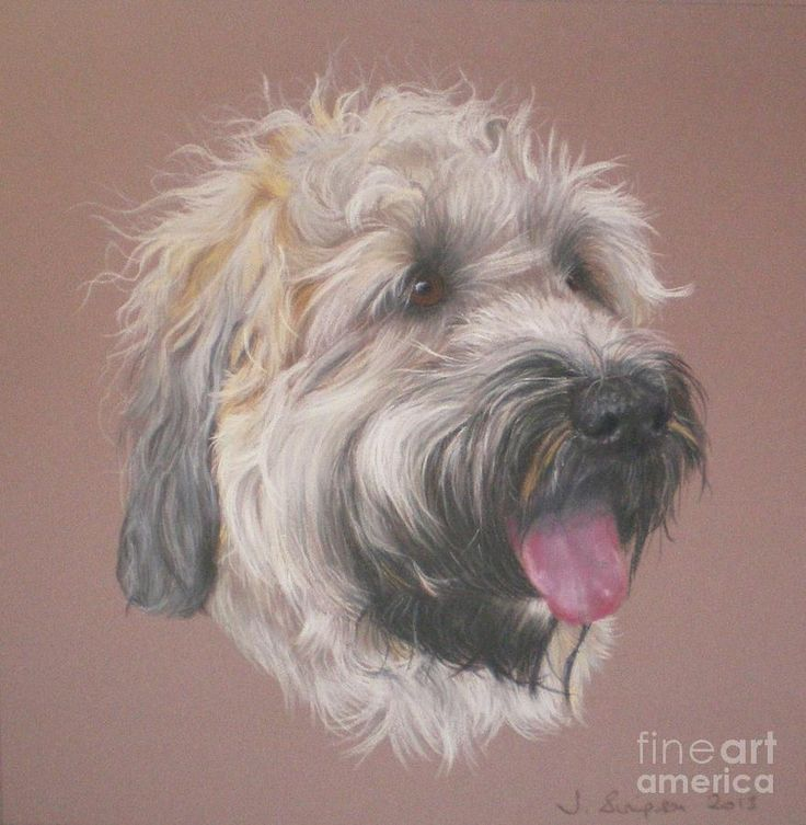 736x753 9 Best Wheaten Terrier Images On Wheaten Terrier