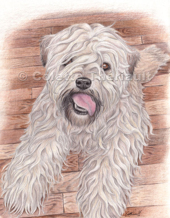 550x705 Soft Coated Wheaten Terrier Colored Pencil Drawing Pet Portraits