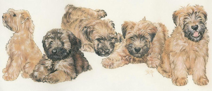 900x388 Soft Coated Wheaten Terrier Puppies Mixed Media By Barbara Keith