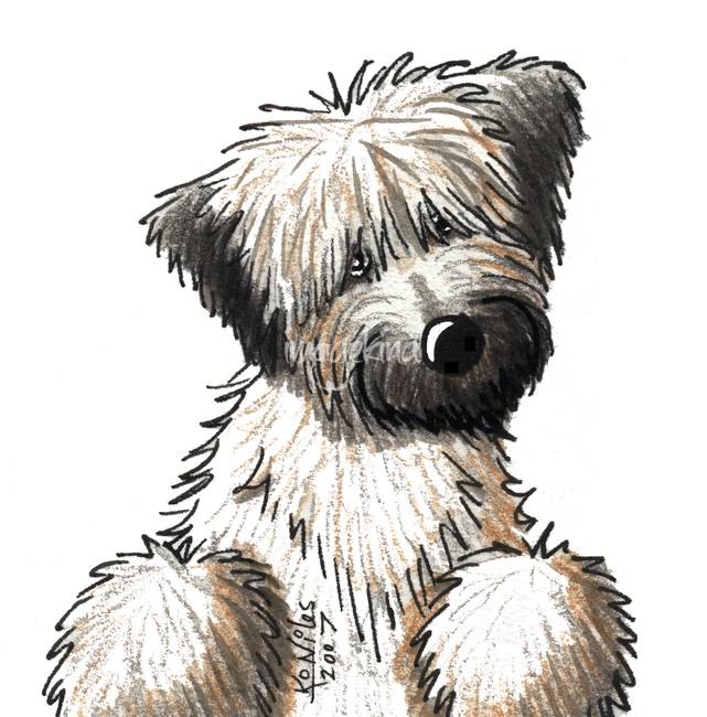 641x650 Stunning Soft Coated Wheaten Terrier Drawings And Illustrations