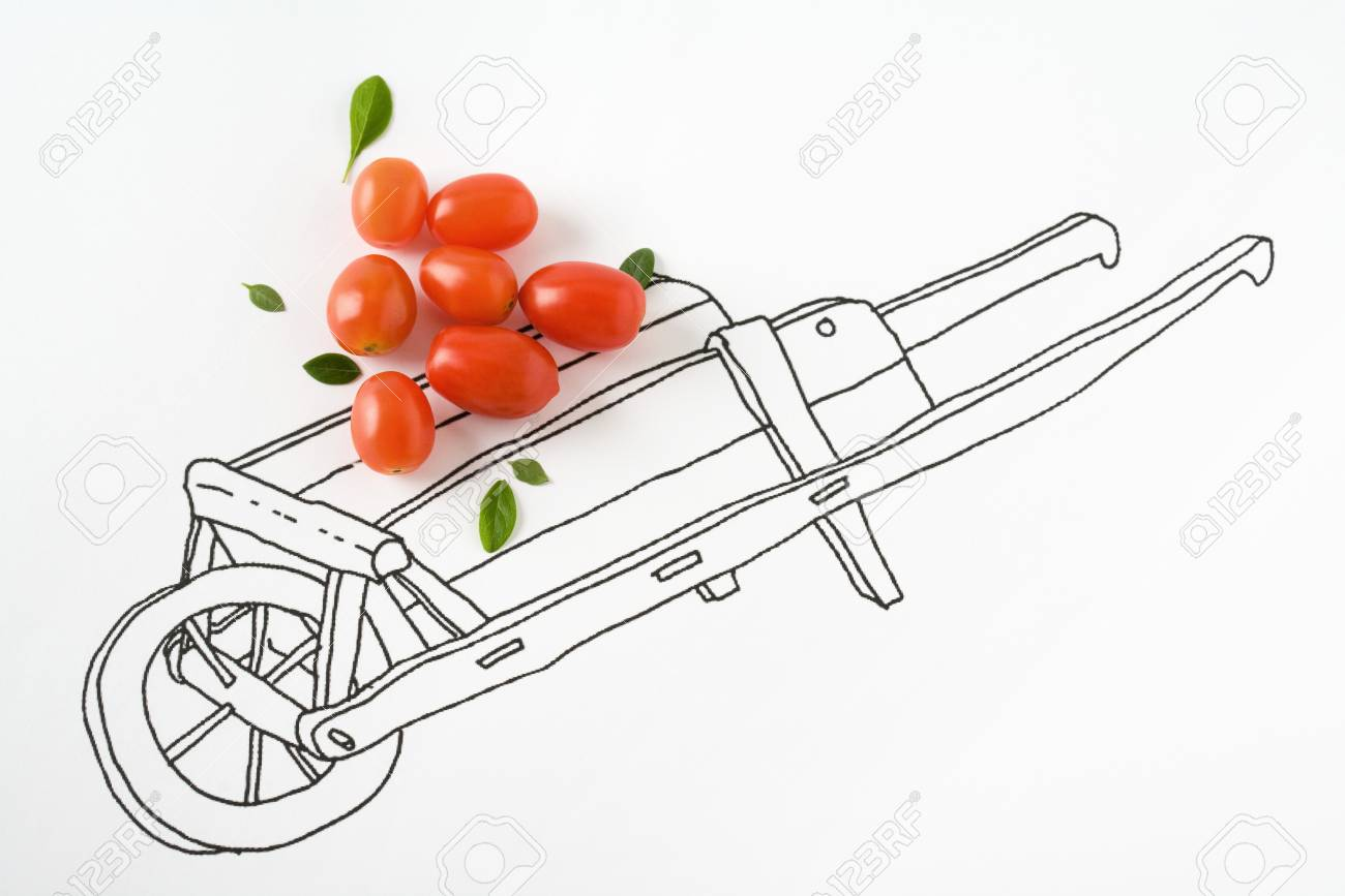 1300x867 Real Cherry Tomatoes On Drawing Of Wheelbarrow Stock Photo