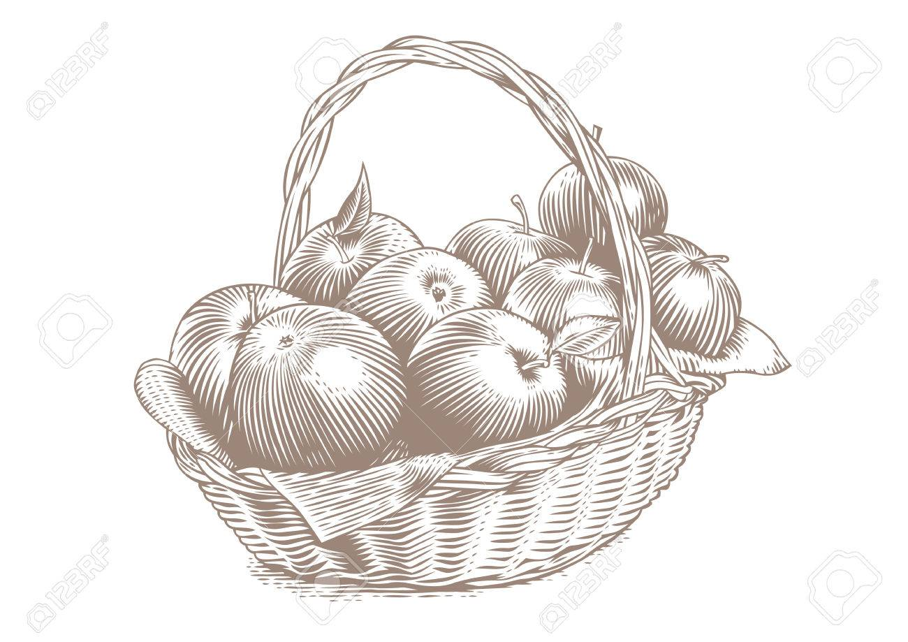 1300x919 Drawing Of Bunch Of Apples In The Wicker Basket Royalty Free