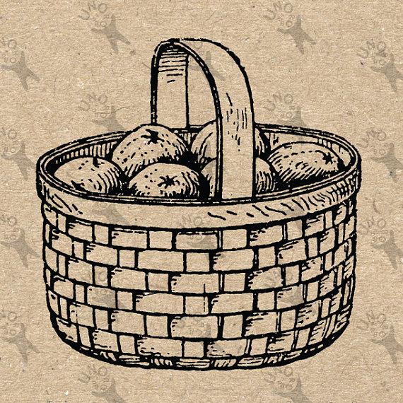 570x570 Vintage Image Wicker Basket Fruit Retro Drawing Instant Download