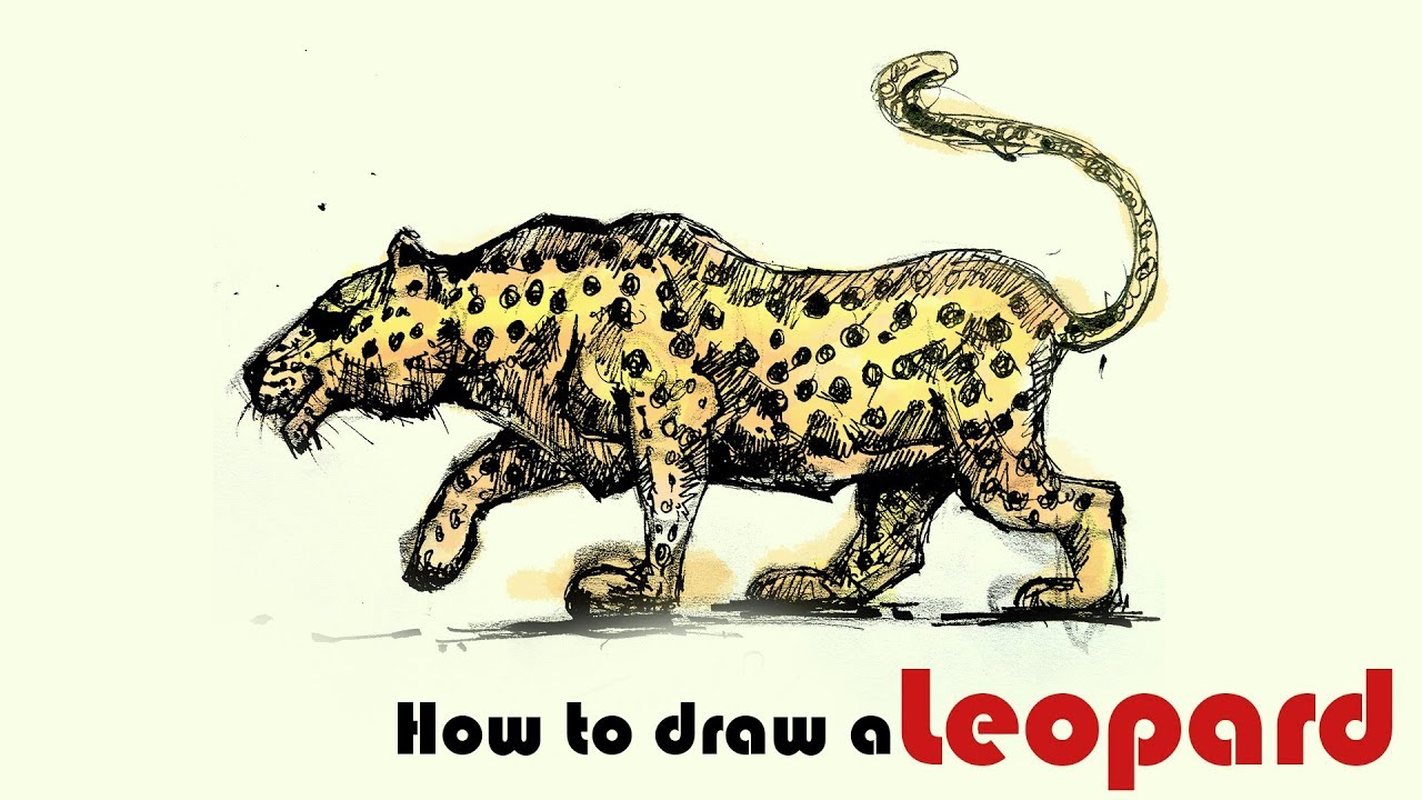 1280x720 Wild Animal Drawing How To Draw A Leopard Leopard Rapid Sketch