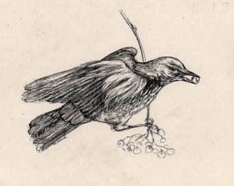 340x270 Small Bird Drawing Etsy