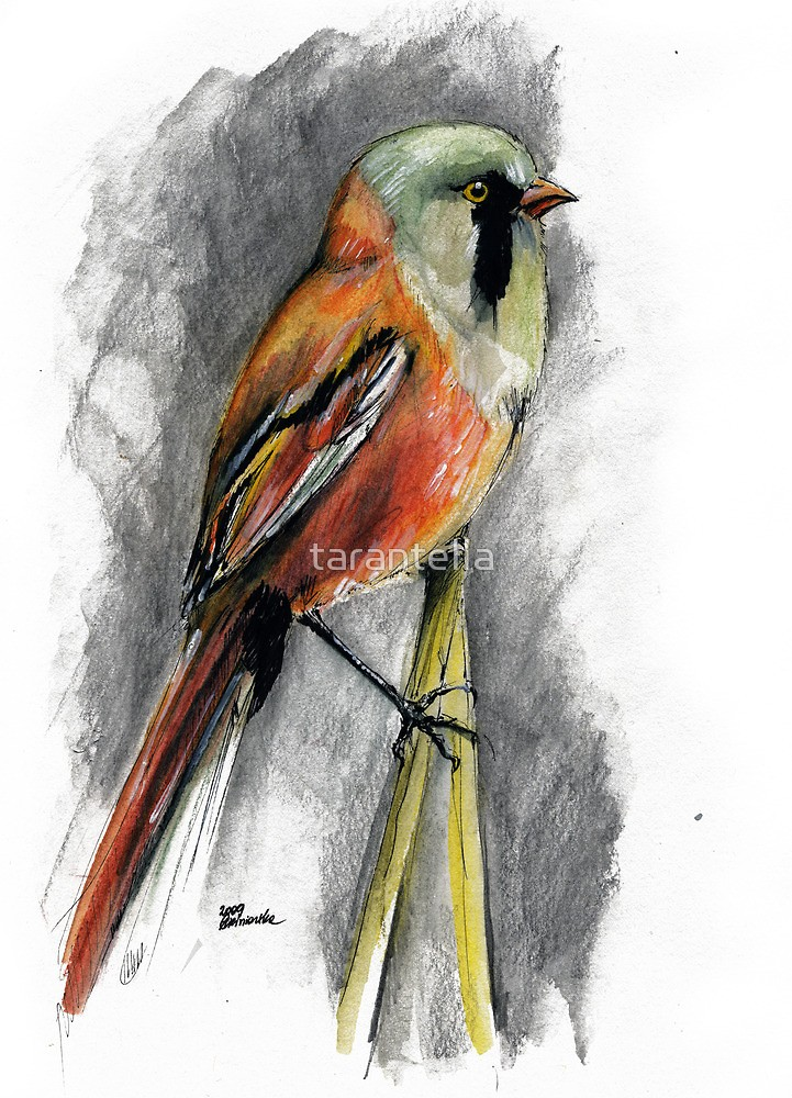 721x1000 Wild Bird Drawing By Tarantella Redbubble