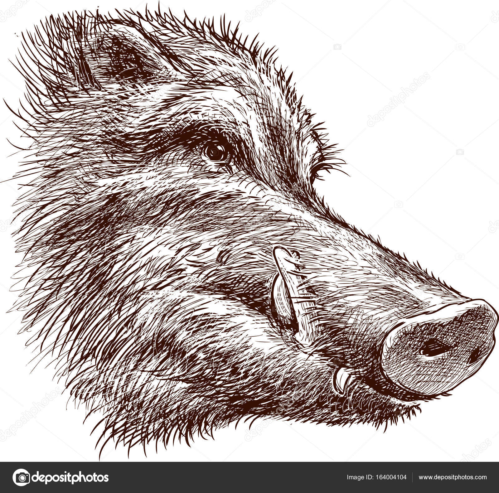 1600x1581 Muzzle Of A Wild Boar Stock Vector Alekseimakarov