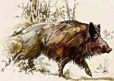 236x168 Pro Wild Boar Drawing Watercolors