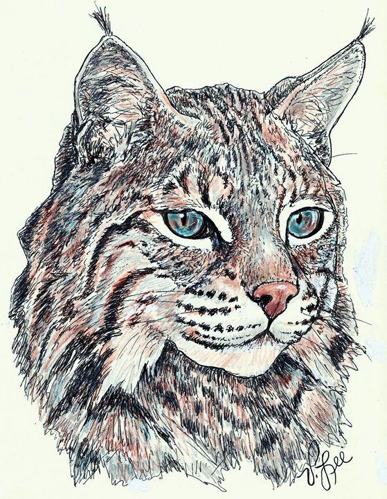 559x720 Bobcat Portrait