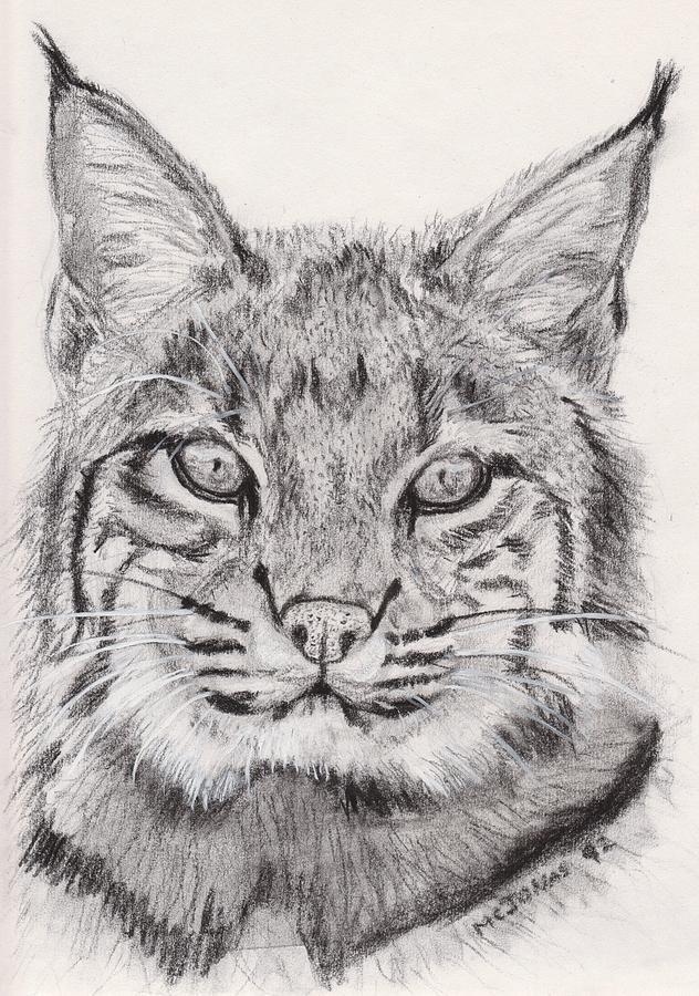 632x900 Bobcat Drawing By Marqueta Graham