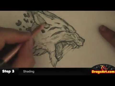 480x360 How To Draw A Wildcat, Tiger Lynx Sketch, Step By Step, In Pencil