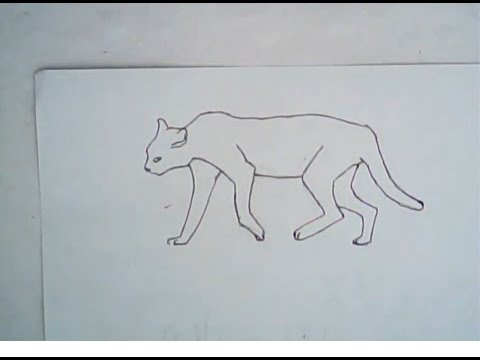 480x360 How To Draw An African Wildcat (Easy, Simple Art)