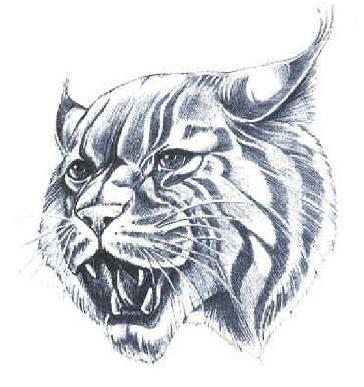 364x387 Wildcat Drawing Wildcat Pride Kentucky