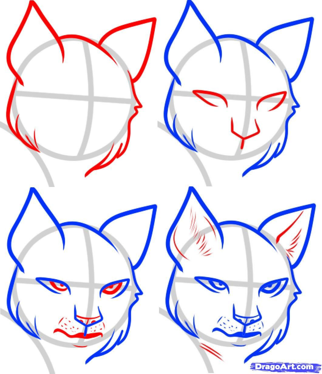 1061x1232 How To Draw A Wildcat Step By Step How To Draw A Lynx, Lynx Step