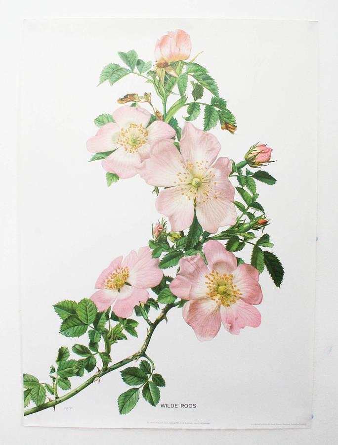 684x900 Vintage Botanical Print
