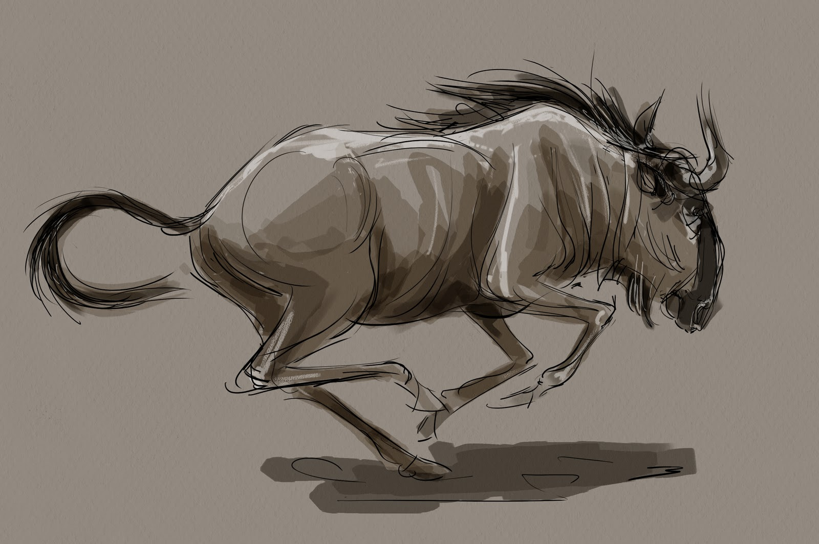 1600x1064 Animal And Life Drawing Blog Wildebeest