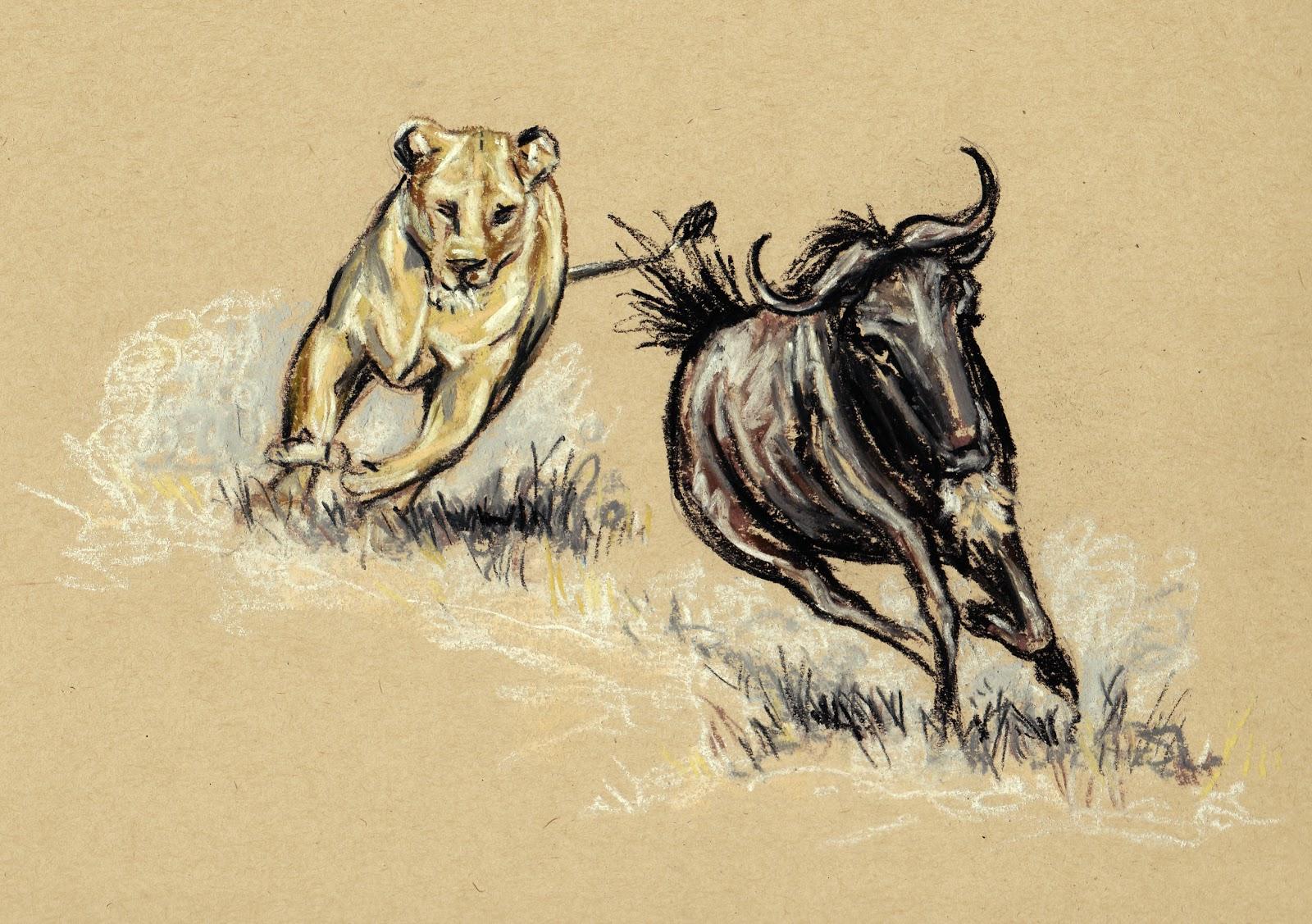 1600x1127 Wildebeest Drawings