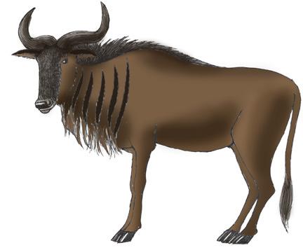 432x357 Wildebeest Color.jpg